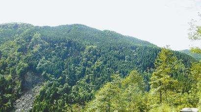 深化国有林场林区改革 实施生态文明战略